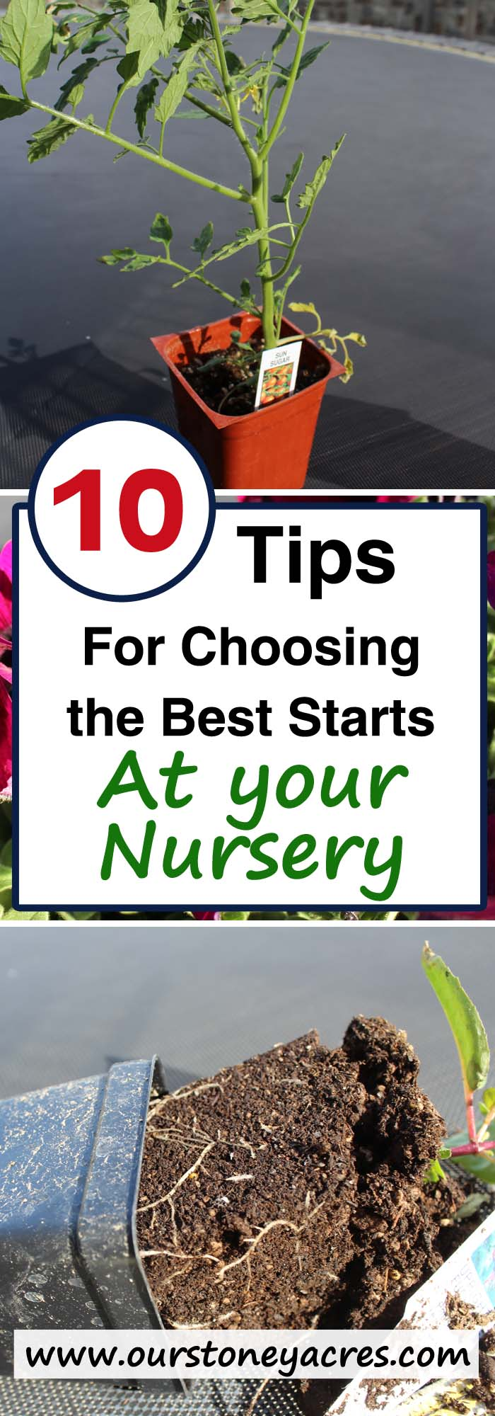 Choose the best plant starts