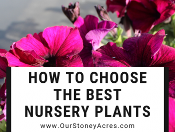 How to Choose the best Nursery Plants Feature
