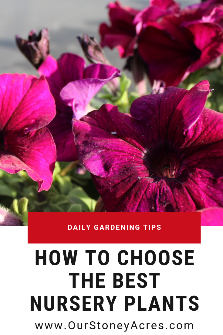 choose the best plant starts Pin