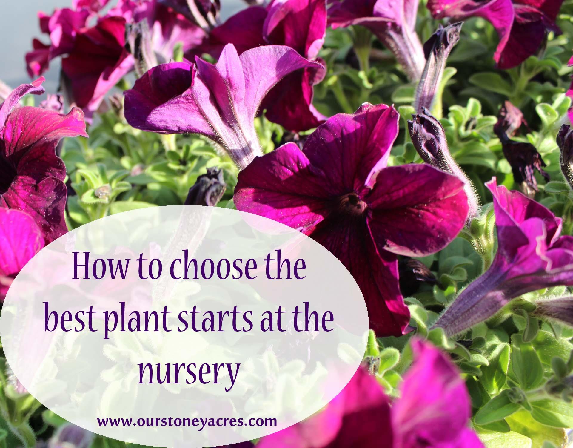 choose the best plant starts