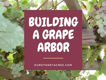 Building a Grape Arbor - FB