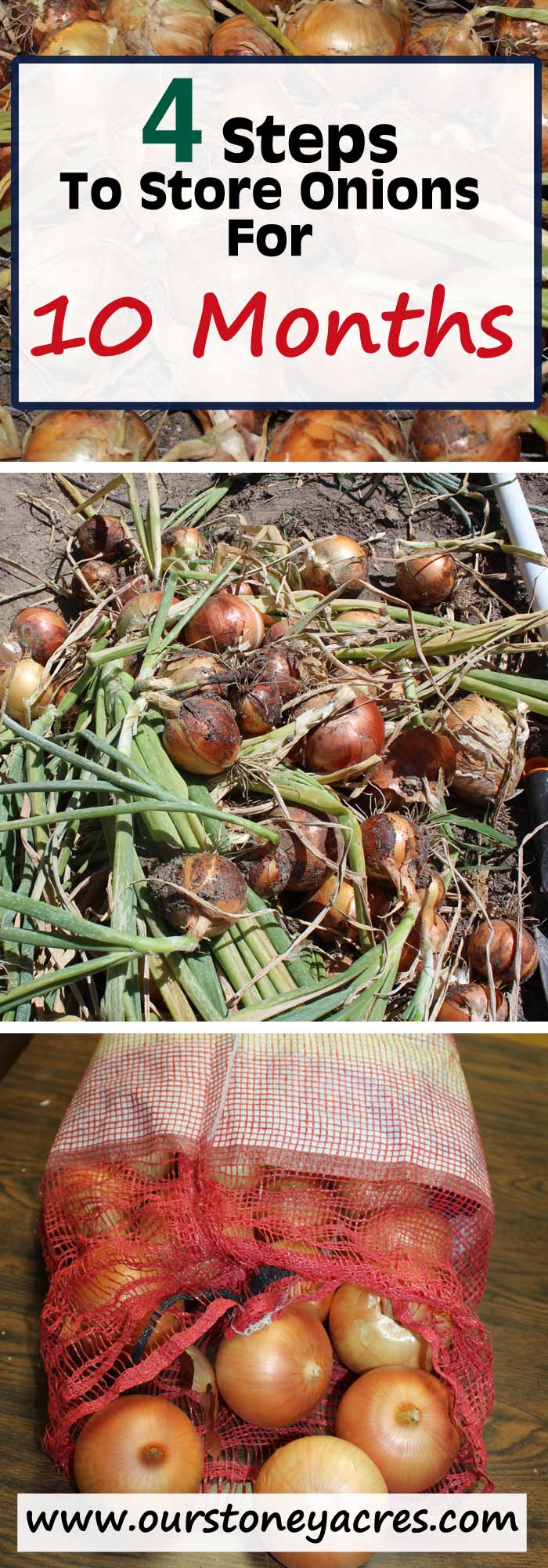 Curing and storing onions