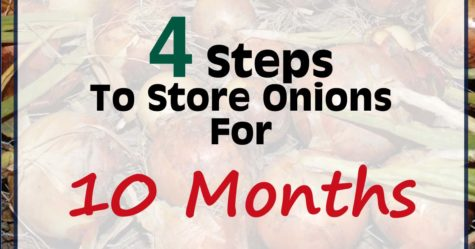 Curing and storing onions fb