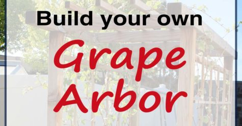 DIY Grape Arbor fb