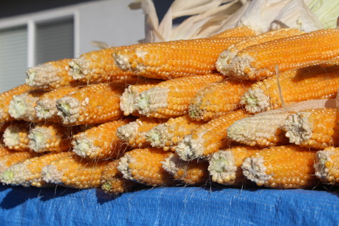 The 5 best crops for Self Sufficient Gardeners Popcorn