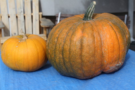 The 5 best crops for Self Sufficient Gardeners Squash