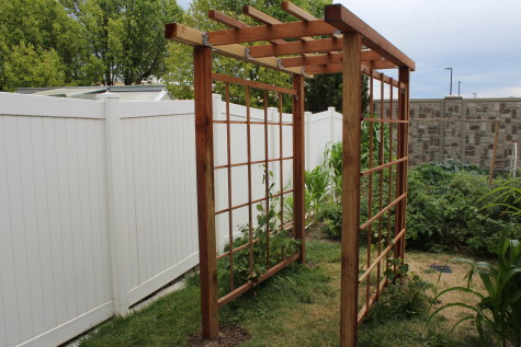 Building a Grape Arbor 1
