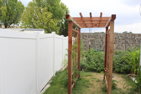 Building a Grape Arbor front