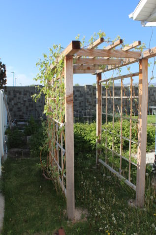 Building a Grape Arbor 20
