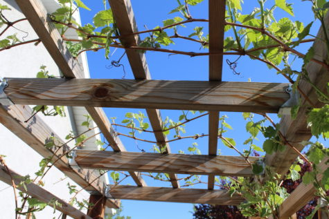 Building a Grape Arbor 21