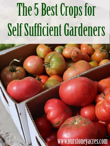The 5 Best Crops for Self Sufficient Gardeners