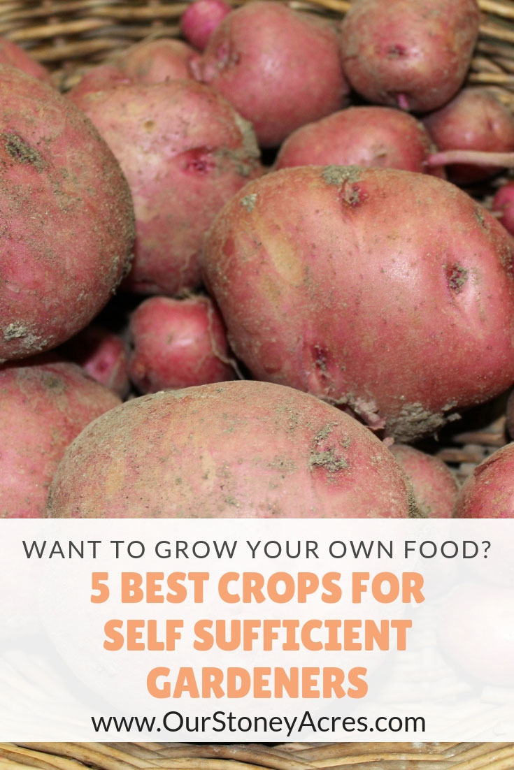 5 Crops for self sufficient gardeners