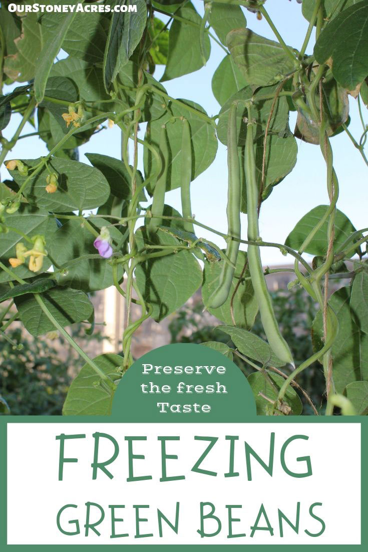 Freeze Green Beans