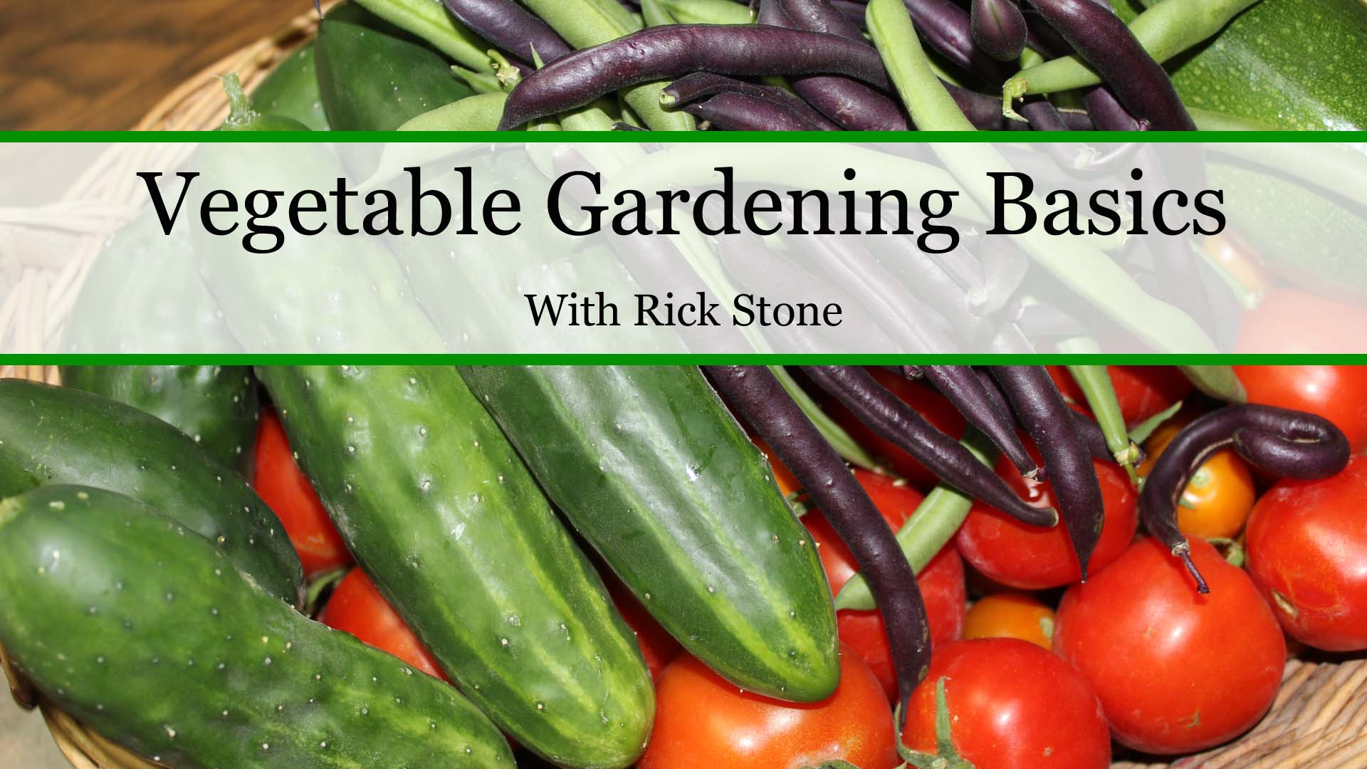 Vegetable gardening basics stoney acres for Gardening 101 vegetables
