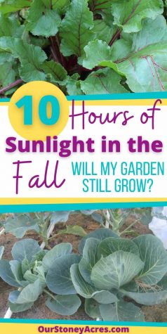 Can my Garden grow in the Fall