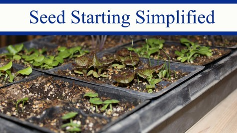 Seed Starting Simplified