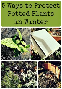 5-Ways-to-Protect-Potted-Plants-in-Winter
