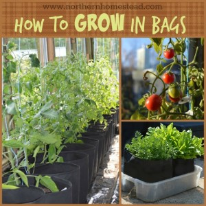 How-to-Grow-in-Bags1