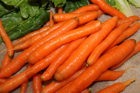 Growing Carrots for Winter Harvest 5