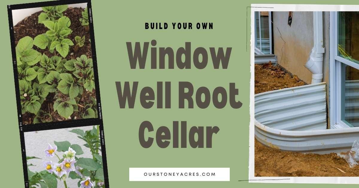 Window Well Root Cellar DIY