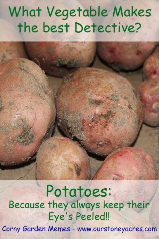 Potato Detective