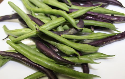 How to Grow Green Beans #6