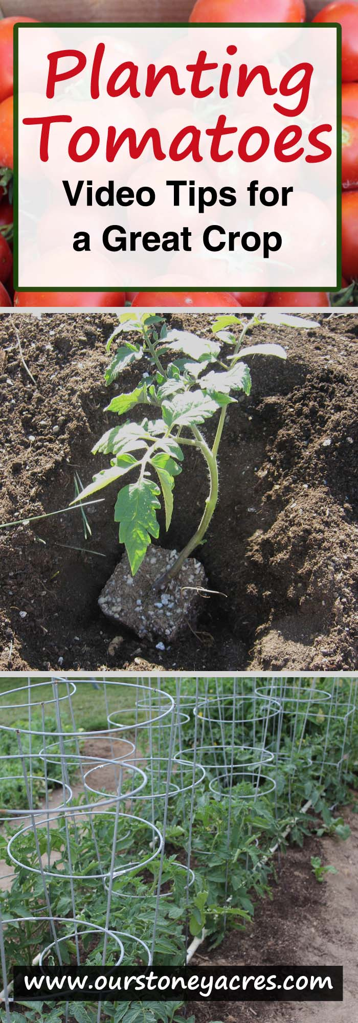 Planting Tomatoes - Video Post