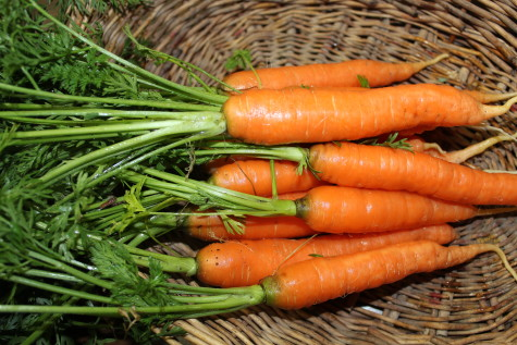 Vegetable Crop Families Carrots
