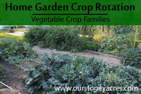 Vegetable Crop Families