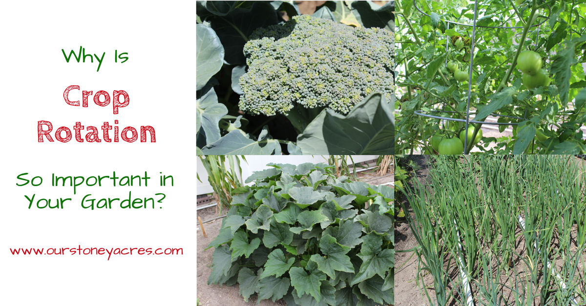 The importance of crop rotation in the home garden for The importance of landscaping