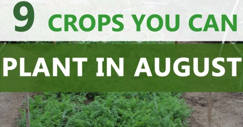 crops you can plant in August FB
