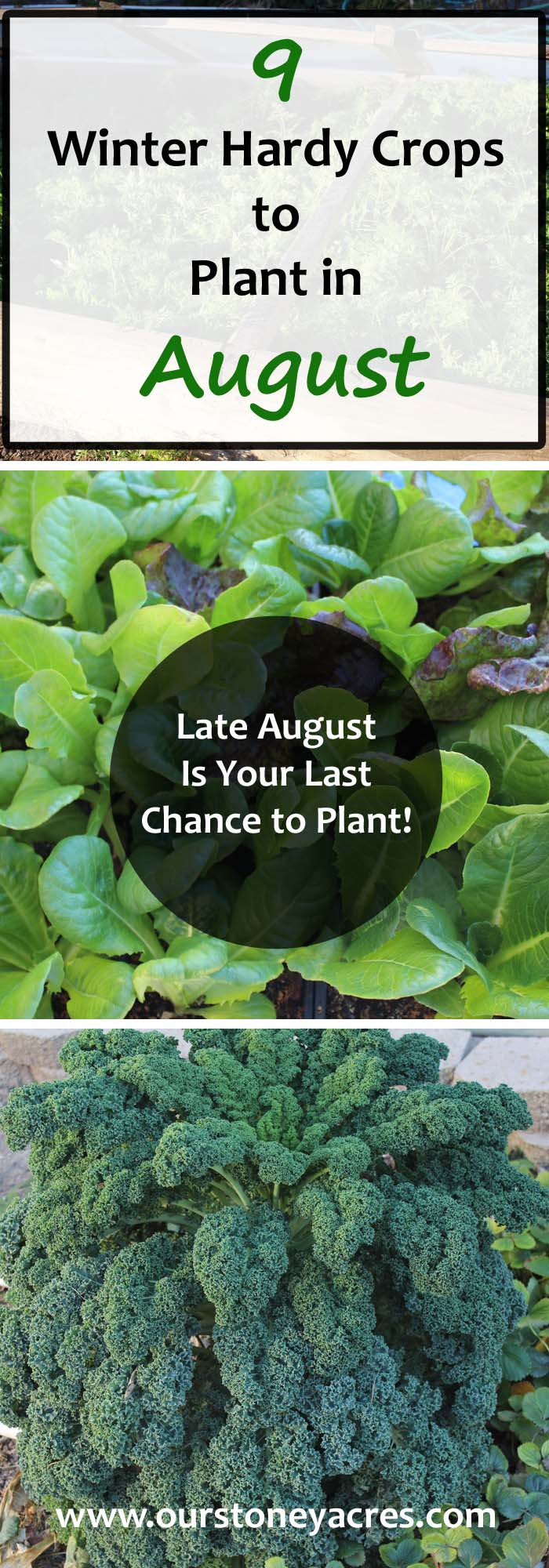 9 Crops You Can Plant In August For Fall And Winter Harvest Stoney Acres