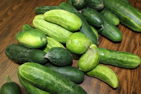 Growing cucumbers Harvest