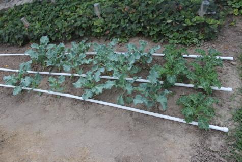 Fall Gardening Resource Guide 1