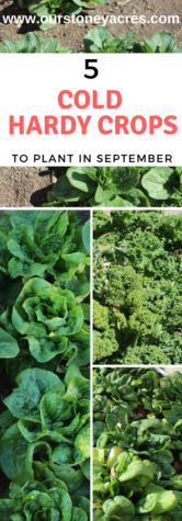 September Planting Guide #4