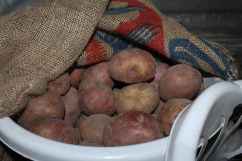 Storing Potatoes 4