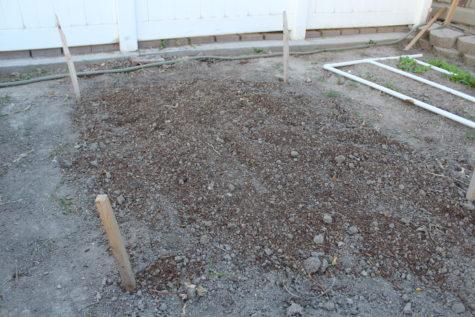 Planting Garlic 2