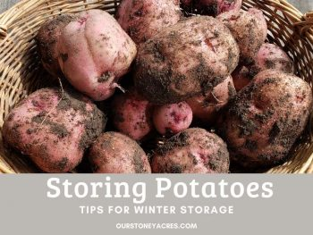 How to Store Potatoes tips