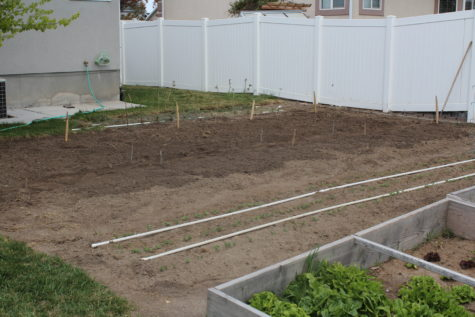 November Garden tasks 6