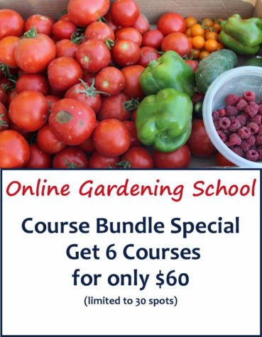 Course Bundle $60