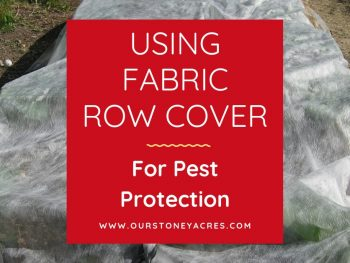 Row cover as pest protection