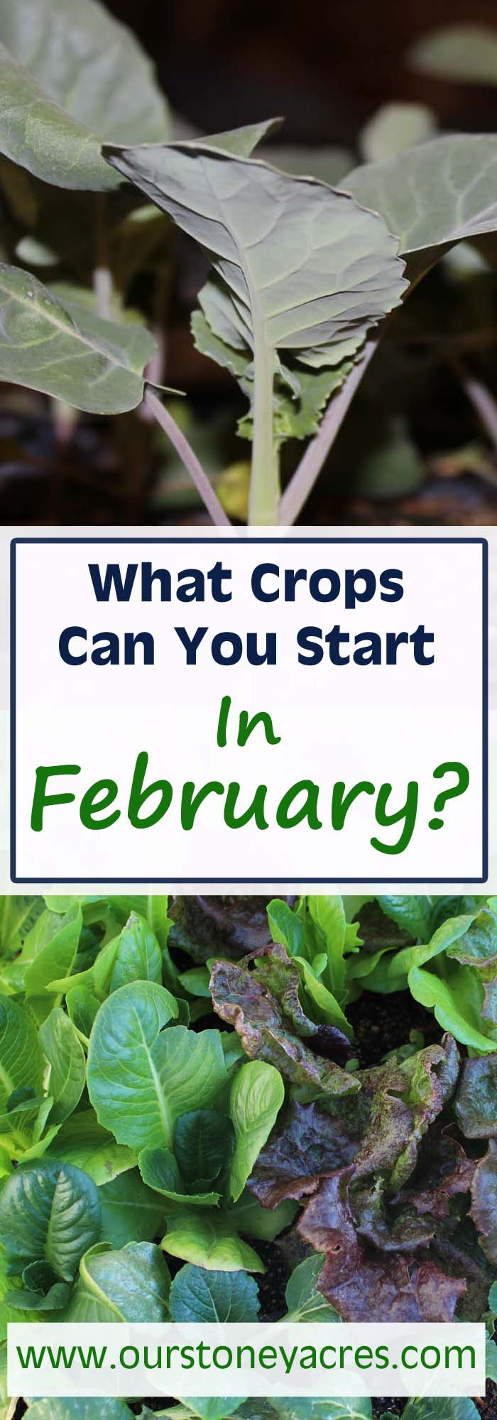 February Seed Starting Schedule #2