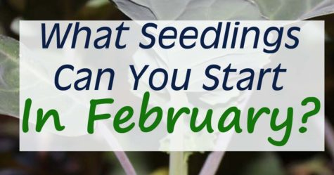 February Seed Starting Schedule FB