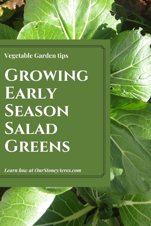 Succession Planting vegetable Garden