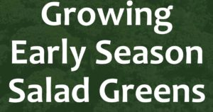 Growing Early Season Salad Greens FB