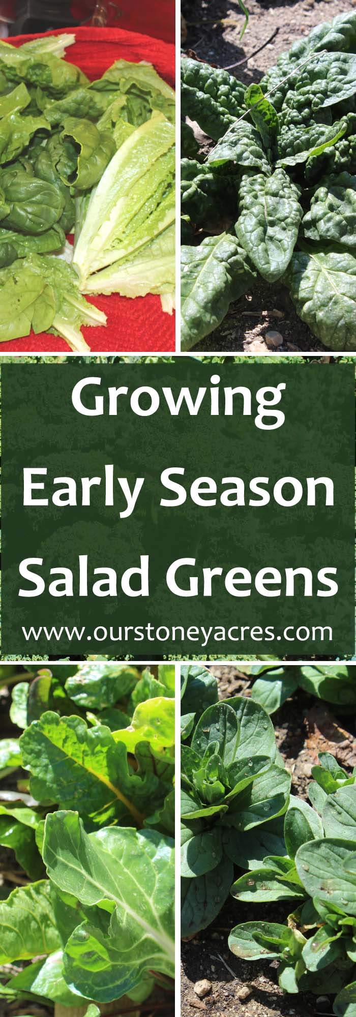 Growing Early Season Salad Greens