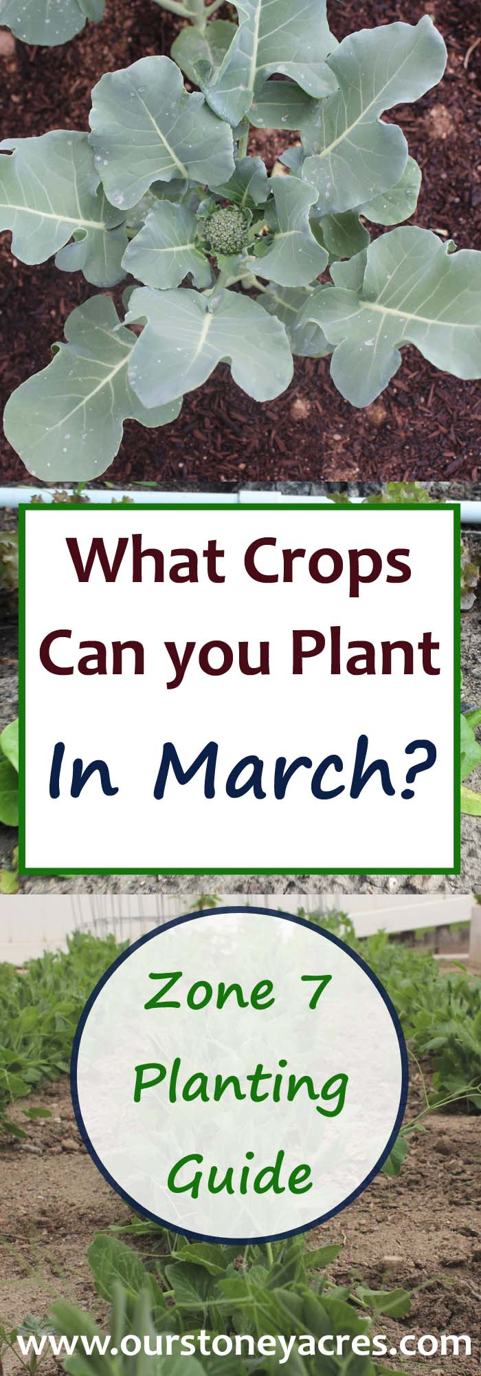 March Planting Guide for Zone 7