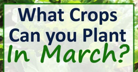 March Planting Guide Zones 4-6 FB