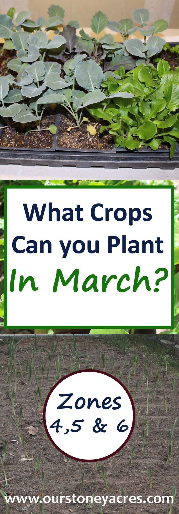 March Planting Guide Zones 4-6