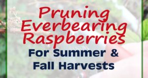 Pruning Everbearing Raspberries FB